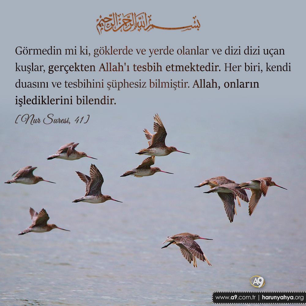 """<table style=""""width: 100%;""""><tr><td style=""""vertical-align: middle;"""">Görmedin mi ki, göklerde ve yerde olanlar ve dizi dizi uçan kuşlar, gerçekten Allah""""ı tesbih etmektedir. Her biri, kendi duasını ve tesbihini şüphesiz bilmiştir. Allah, onların işlediklerini bilendir. [Nur Suresi, 41]</td><td style=""""max-width: 70px;vertical-align: middle;""""> <a href=""""/downloadquote.php?filename=15073987390.jpg""""><img class=""""hoversaturate"""" height=""""20px"""" src=""""/assets/images/download-iconu.png"""" style=""""width: 48px; height: 48px;"""" title=""""Resmi İndir""""/></a></td></tr></table>"""