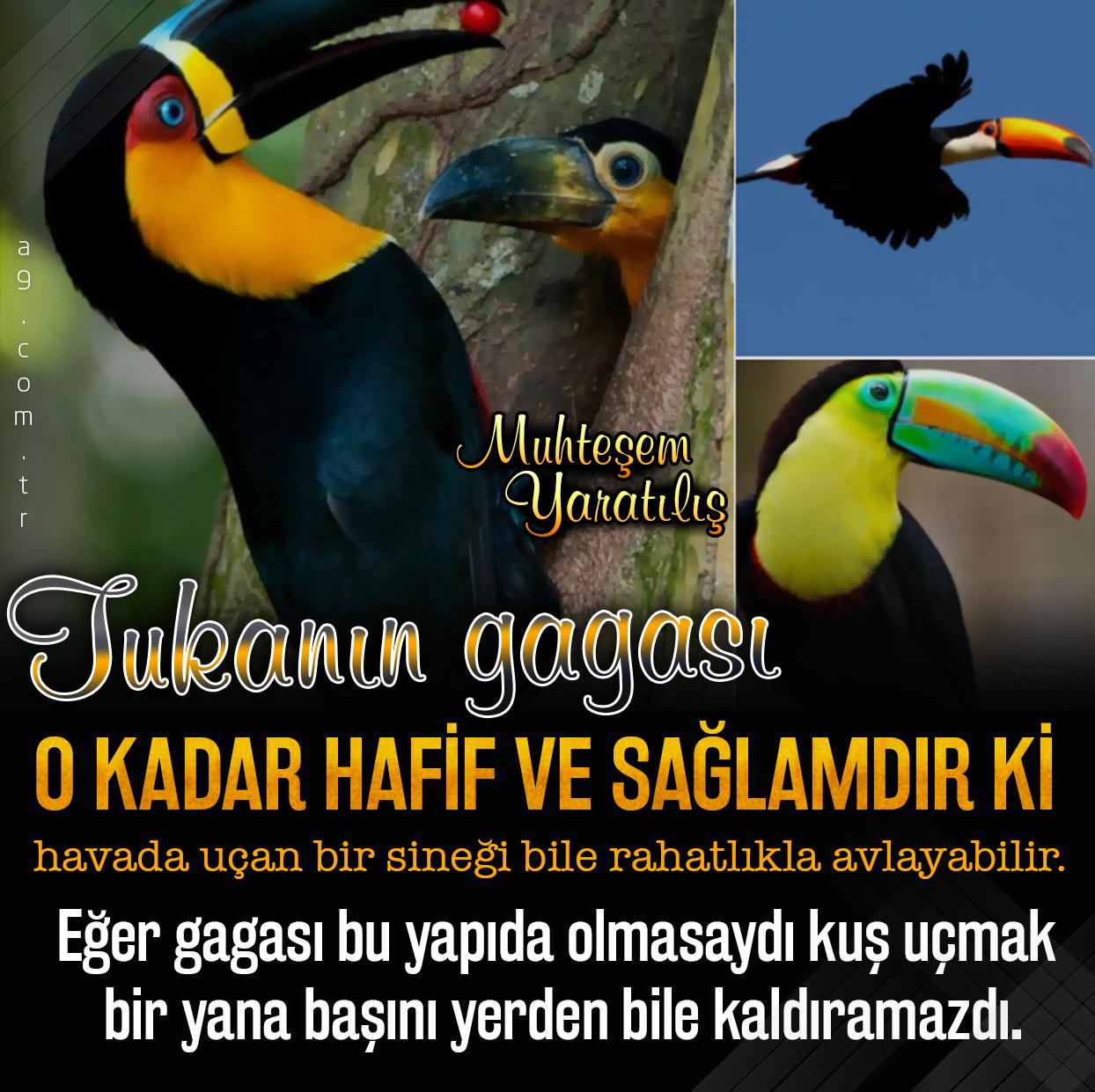 """<table style=""""width: 100%;""""><tr><td style=""""vertical-align: middle;"""">Kuşlar arasında vücuduna oranla en büyük gası olan kuş tukandır. Tukanın gagası o kadar hafif ve sağlamdırki havada uçan bir sineği bile rahatlıkla avlayabilir. Eğer gagası bu yapıda olmasaydı kuş uçmak bir yana başını yerden bile kaldıramazdı.</td><td style=""""max-width: 70px;vertical-align: middle;""""> <a href=""""/downloadquote.php?filename=1516020493419.jpg""""><img class=""""hoversaturate"""" height=""""20px"""" src=""""/assets/images/download-iconu.png"""" style=""""width: 48px; height: 48px;"""" title=""""Resmi İndir""""/></a></td></tr></table>"""