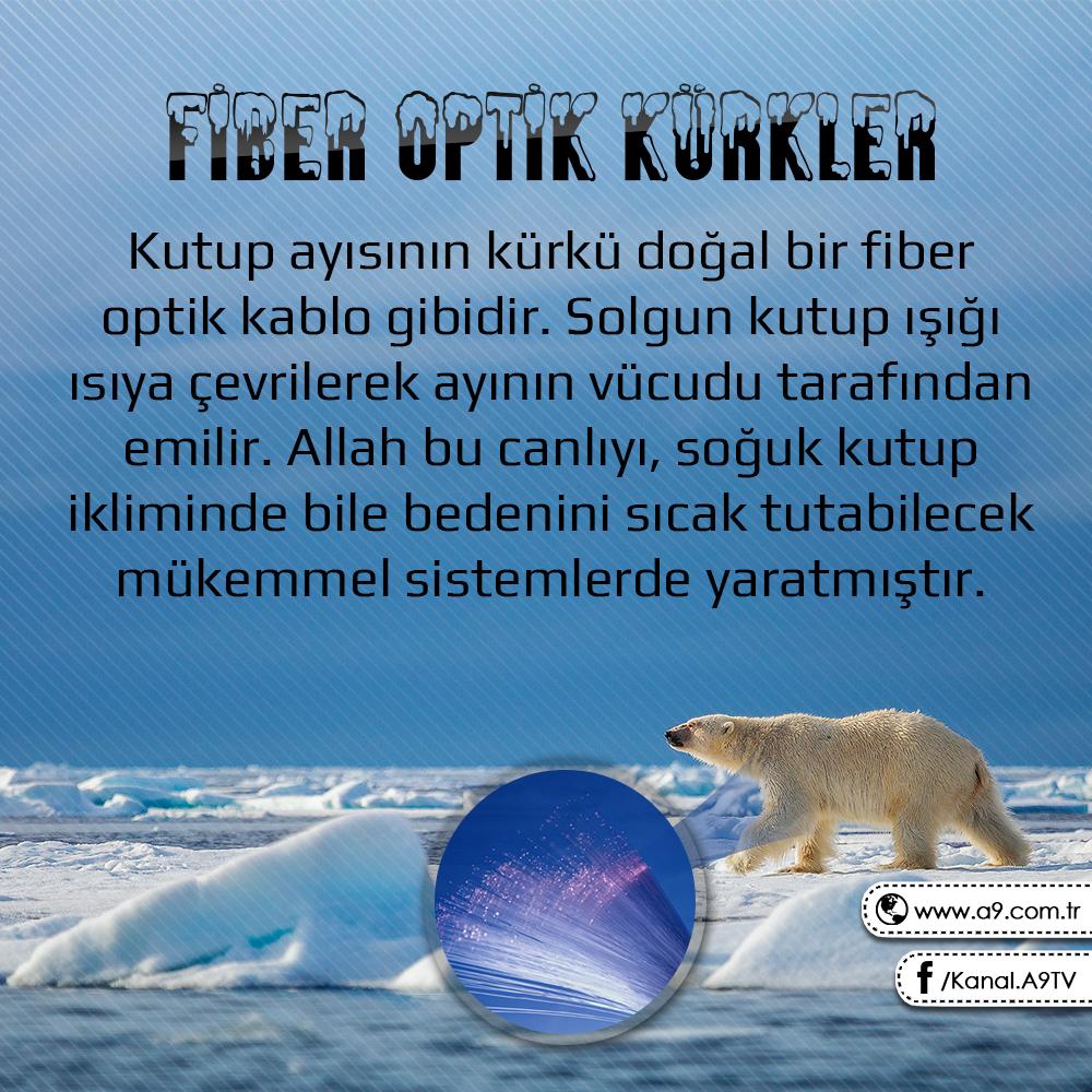 """<table style=""""width: 100%;""""><tr><td style=""""vertical-align: middle;"""">FİBER OPTİK KÜRKLER Kutup ayısının kürkü doğal bir fiber optik kablo gibidir. Solgun kutup ışığı ısıya çevrilerek ayının vücudu tarafından emilir. Allah bu canlıyı, soğuk kutup ikliminde bile bedenini sıcak tutabilecek mükemmel sistemlerde yaratmıştır. </td><td style=""""max-width: 70px;vertical-align: middle;""""> <a href=""""/downloadquote.php?filename=1518967716642.jpg""""><img class=""""hoversaturate"""" height=""""20px"""" src=""""/assets/images/download-iconu.png"""" style=""""width: 48px; height: 48px;"""" title=""""Resmi İndir""""/></a></td></tr></table>"""